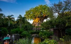 Обои Animal Kingdom, трава, дерево
