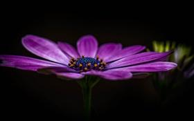 Картинка цветок, лепестки, фон