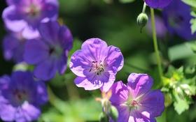 Обои природа, лепестки, сад, двор, клумба