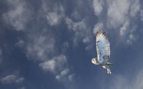 Обои сова, птица, полёт