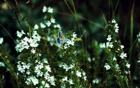 Обои бабочка, цветы, зелень, боке