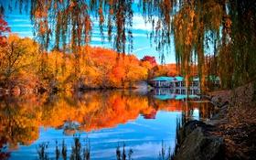 Обои осень, деревья, ветки, отражение, камни, листва, желтые
