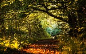 Обои лес, листья, солнце, деревья, путь, тени
