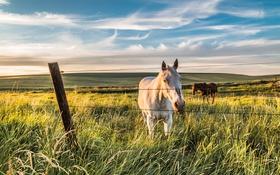Обои лето, конь, забор