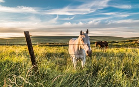 Картинка лето, конь, забор