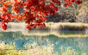 Картинка осень, лес, листья, деревья, озеро, пруд, багрянец