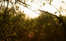 Обои листья, солнце, ветви, Природа