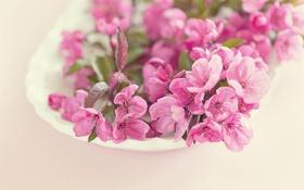 Обои макро, цветы, розовые, цветение