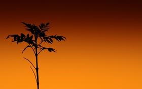 Картинка небо, трава, листья, растение, стебель, силуэт, зарево