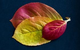 Обои багрянец, текстура, листья, осень