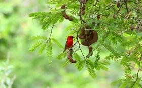 Картинка птица, боке, тамаринд