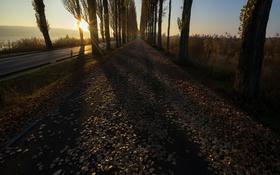 Обои дорога, осень, утро