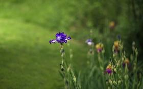 Обои лето, цветы, природа