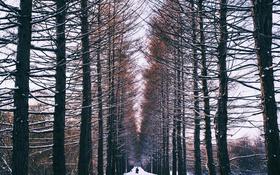 Обои зима, лес, снег, люди, аллея