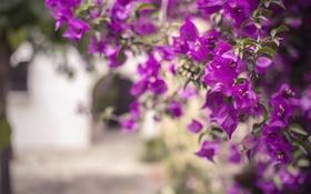 Обои цветы, лепестки, ветки