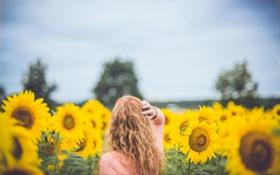 Картинка поле, небо, девушка, облака, деревья, волосы, спина