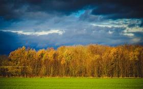 Обои лес, осень, деревья, поле, небо, тучи