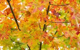 Картинка осень, листья, ветки, дерево, краски