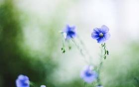 Картинка цветы, лепестки, синие