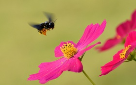 Обои природа, цветок, насекомое, лепестки