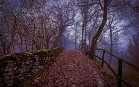 Картинка парк, осень, листья