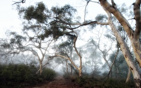 Картинка природа, лес, туман
