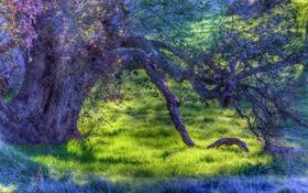 Обои осень, hdr, трава, дерево, аетки