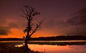 Картинка дерево, озеро, отражение, лес, зарево, небо, облака