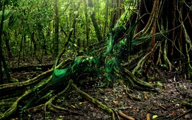 Обои roots, forest, tree, green