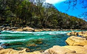 Обои деревья, камни, берег, течение, речка