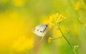 Обои White butterfly, 白粉蝶, nature