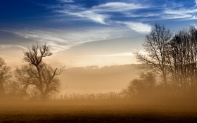 Обои поле, утро, туман