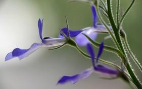 Обои цветок, лепестки, стебель, экзотика