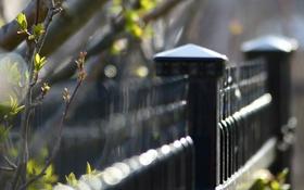 Обои город, забор, ветка, весна, размытость