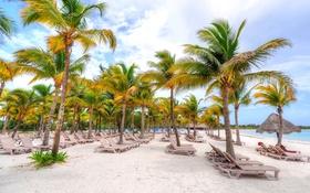 Обои песок, осень, пляж, тропики, пальмы, лежак