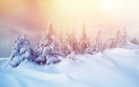 Обои winter, лес, nature, елка, снежинки, зима, снег