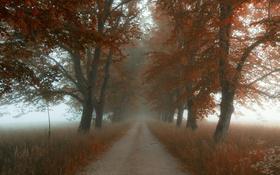 Обои дорога, поле, осень, листья, деревья, туман, листва