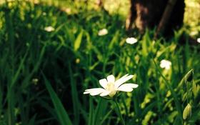 Картинка лес, цветок, макро, зеленый, фон, ромашка