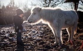 Обои конь, игрушка, мальчик