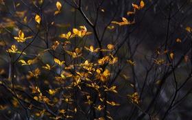 Обои природа, ветки, листья