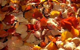 Обои рендеринг, краски, осень, линии, капли, листья