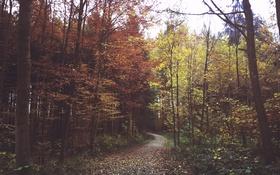 Обои зелень, осень, лес, листья, ветки, дорожка