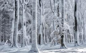 Обои природа, лес, снег, зима