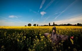 Картинка поле, пейзаж, чучело, рапс