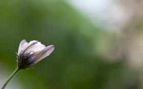 Обои фон, природа, цветок