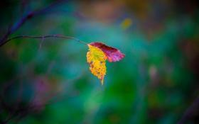 Картинка осень, листья, фон, ветка