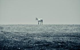 Обои поле, небо, лошадь, линия, горизонт