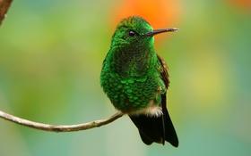 Картинка природа, птица, цвет, ветка, клюв