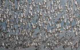 Картинка птицы, природа, стая