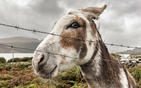 Картинка природа, забор, осёл, donkey